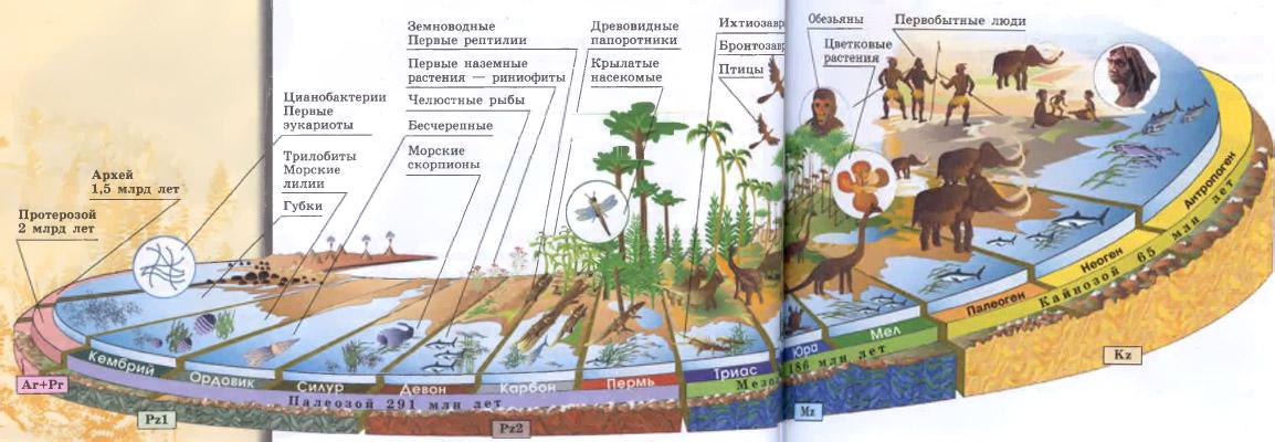 Хронология развития жизни на земле доклад 7400