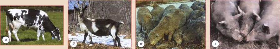 Животноводство это что такое какие определение значение  Животноводство
