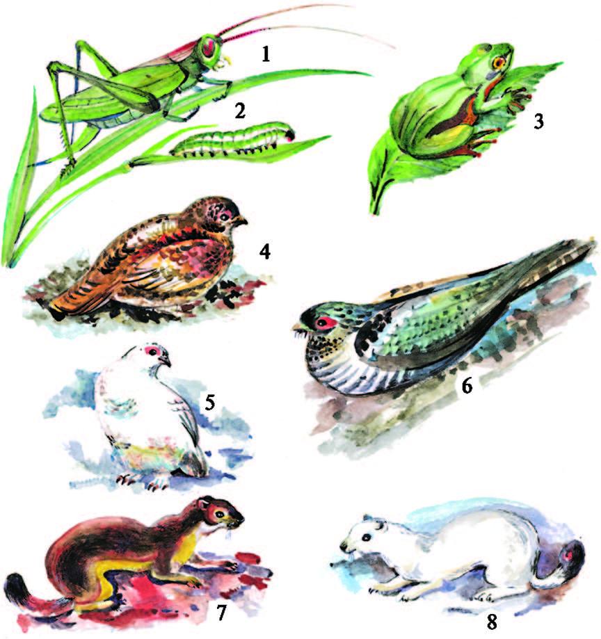 Реферат среда обитания животных 771
