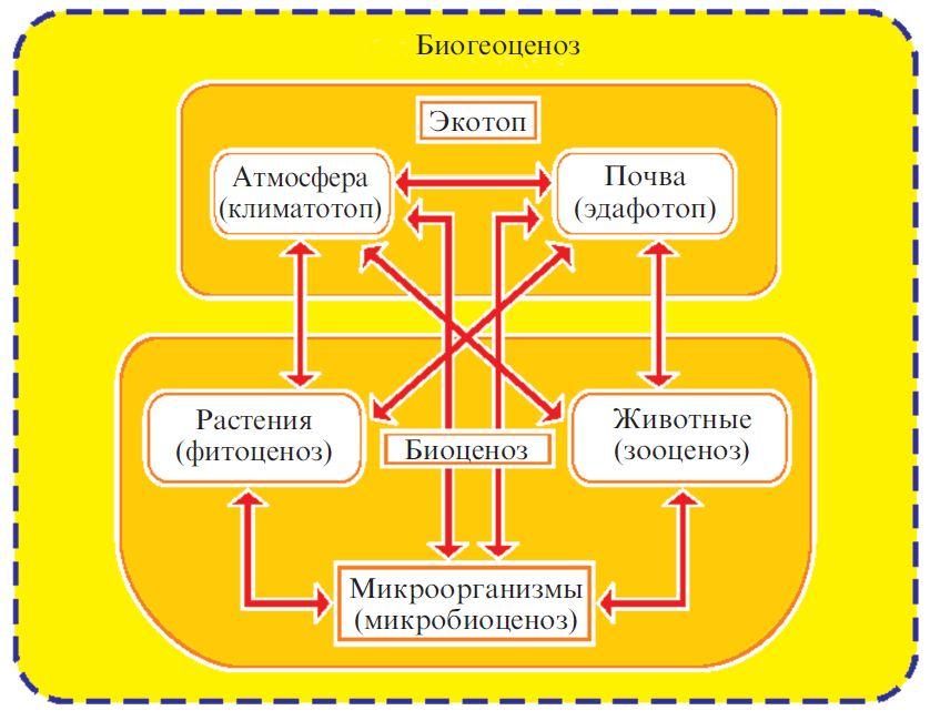 Характеристика биогеоценоза и экосистем реферат с кратким описанием 6033